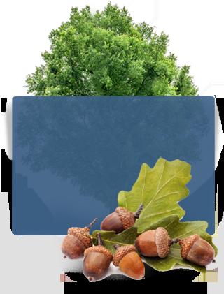Four Seasons Tree Care Service - North York