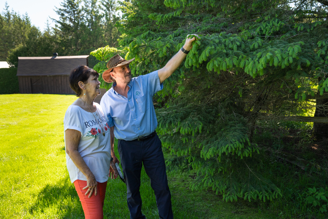 monitoring the health of your trees