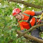 shane lund certified arborist
