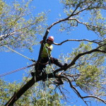 tree care service aurora