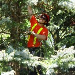 tree care service stouffville