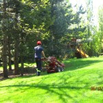 tree care service newmarket
