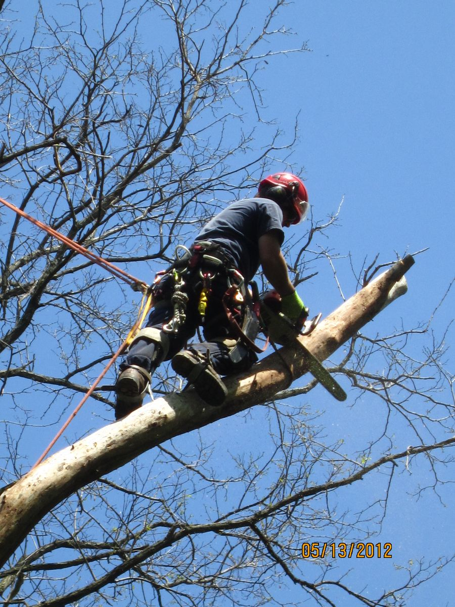 tree removal aurora by Four Seasons Tree Care