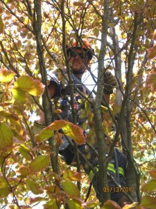 tree pruning toronto tree pruning north york