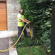 tree care service toronto