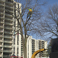 tree care service north york