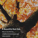 red oak tree north york