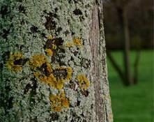 algae, lichen and moss