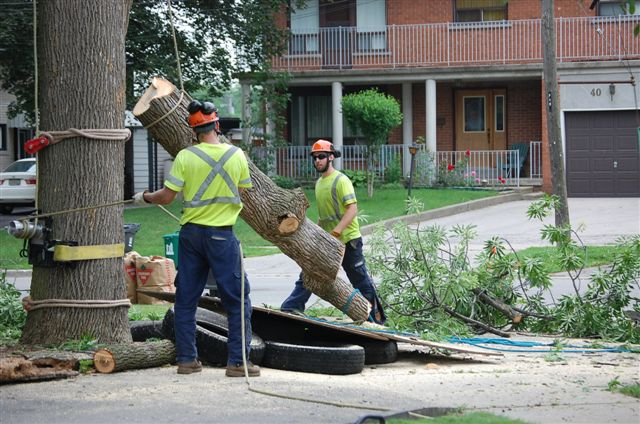 Tree Care Service Stouffville, Tree Care Service Newmarket, Tree Care Service North York, Tree Care Service Markham, Tree Care Service Aurora, Tree Care Service Toronto