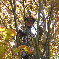 tree care service markham
