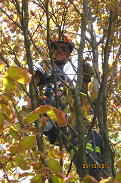 tree pruning stouffville
