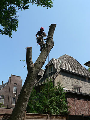 tree removal by four seasons tree care