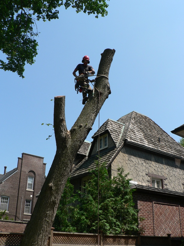 tree removal newmarket by Four Seasons Tree Care